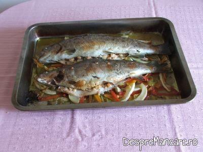 Pastrav umplut cu creveti plus legume la cuptor, cu sos de iaurt si castraveti gata de servit.