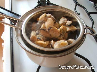Scoici congelate puse in apa fiarta, pentru a crea soc termic de decongelare, pentru orez cu ciuperci, scoici si parmezan.