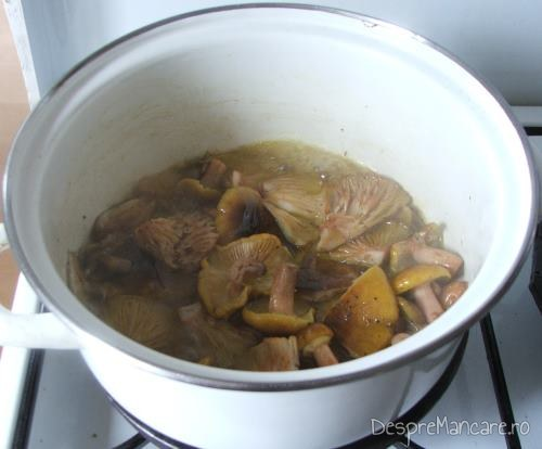 Ciuperci care se calesc in ulei de masline pentru cus-cus cu praz, ciuperci si conopida.