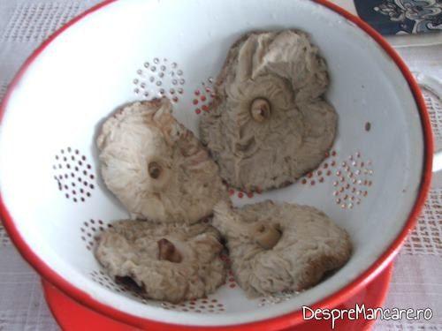 Palarii de nane, fierte in apa cu sare grunjoasa, la scurs intr-o sita, pentru a fi puse apoi in pungi din plastic alimentar la congelator sau pentru a fi prelucrate in continuare ca pane' de nane.