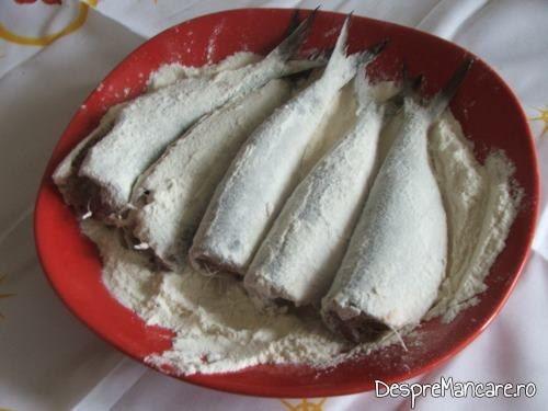 Sardine date prin faina de grau, pregatite pentru prajire intr-un amestec de unt si ulei de masline.