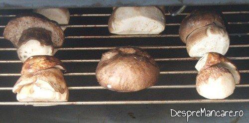 Felii de ciuperci puse la uscat in cuptorul aragazului, la foc mic, pentru 3-4 ore.
