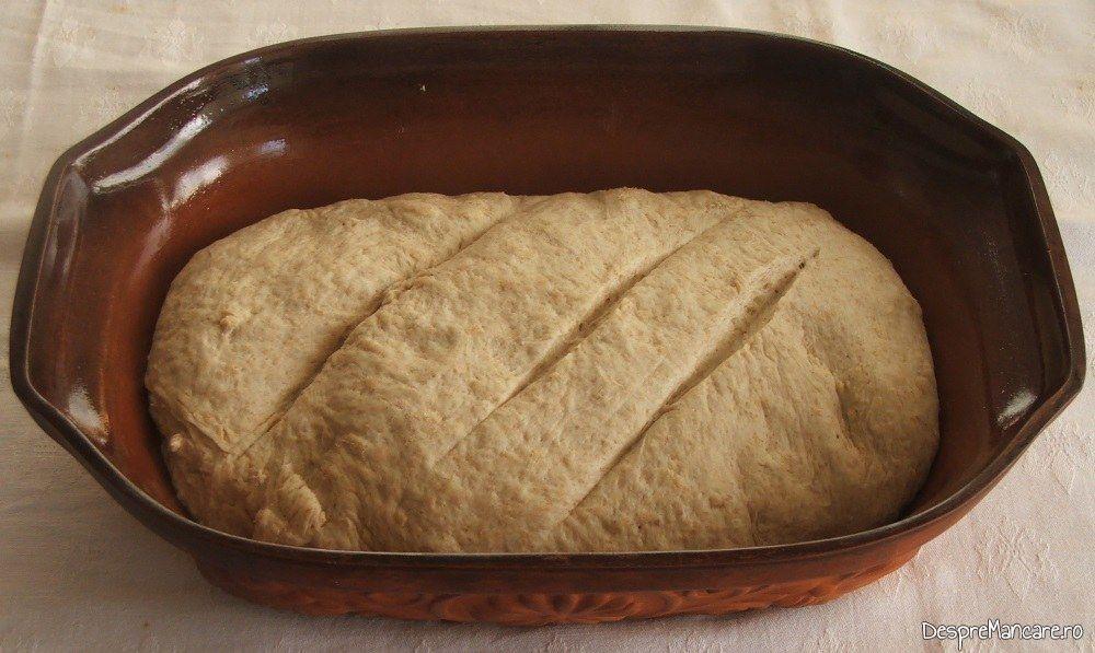 Coca pentru paine de casa coapta in cuptor, pusa in vasul de copt.