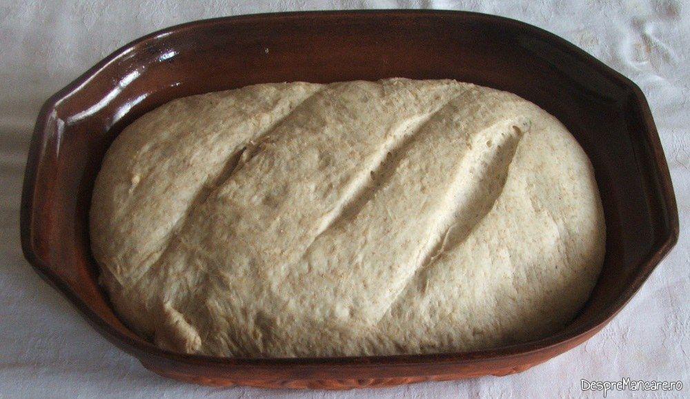 Coca crescuta in vasul roman gata de coacere pentru paine de casa coapta in cuptor.