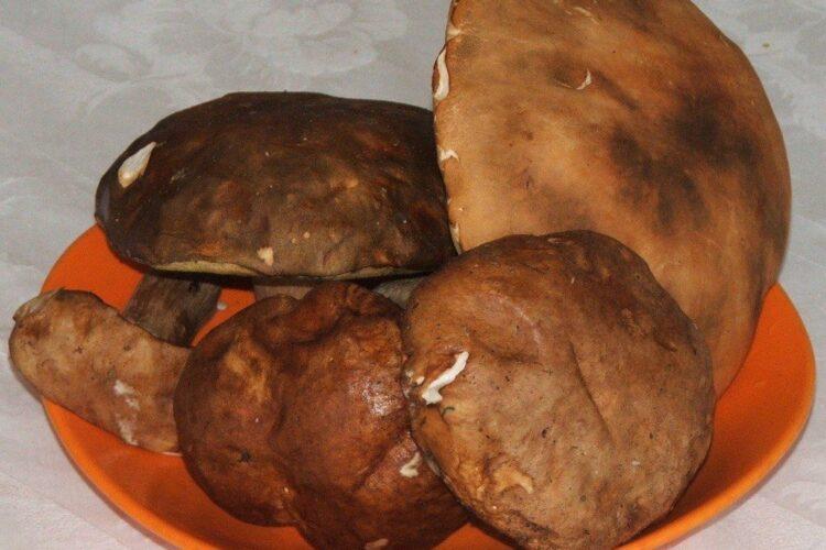 Manatarci/ hribi pentru ciuperci trase in unt servite pe paine prajita.